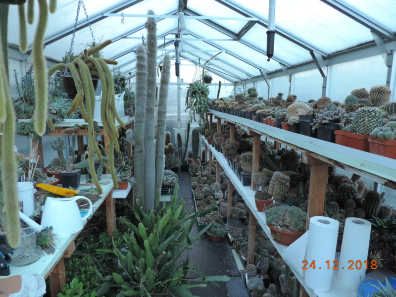 Cacti and Sukkulent in Köln, every day new flowers in the greenhouse Part 205 Bild1915