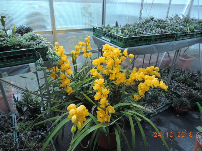 Cacti and Sukkulent in Köln, every day new flowers in the greenhouse Part 205 Bild1916