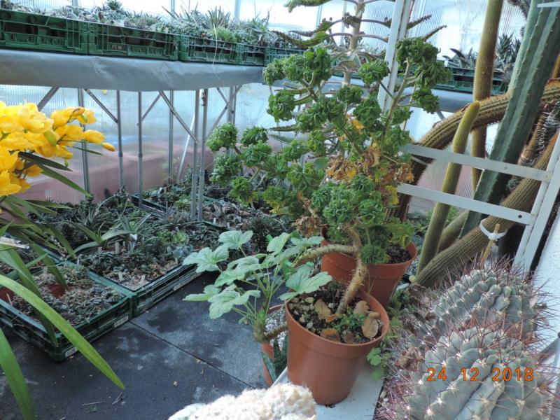 Cacti and Sukkulent in Köln, every day new flowers in the greenhouse Part 205 Bild1917