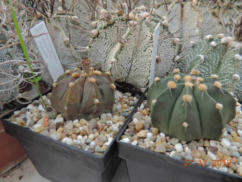 Cacti and Sukkulent in Köln, every day new flowers in the greenhouse Part 205 Bild1918