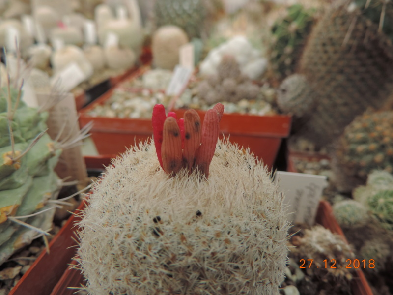Cacti and Sukkulent in Köln, every day new flowers in the greenhouse Part 205 Bild1923