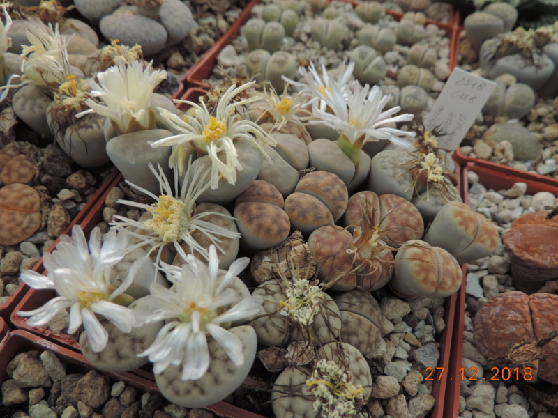 Cacti and Sukkulent in Köln, every day new flowers in the greenhouse Part 205 Bild1925