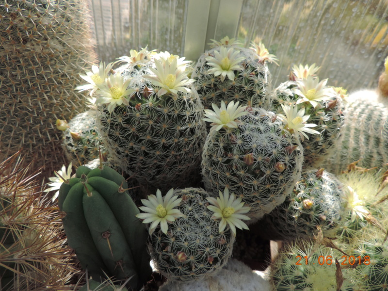 Cacti and Sukkulent in Köln, every day new flowers in the greenhouse Part 206 Bild1960