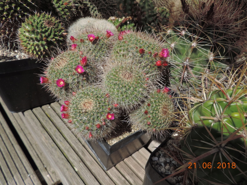 Cacti and Sukkulent in Köln, every day new flowers in the greenhouse Part 206 Bild1989