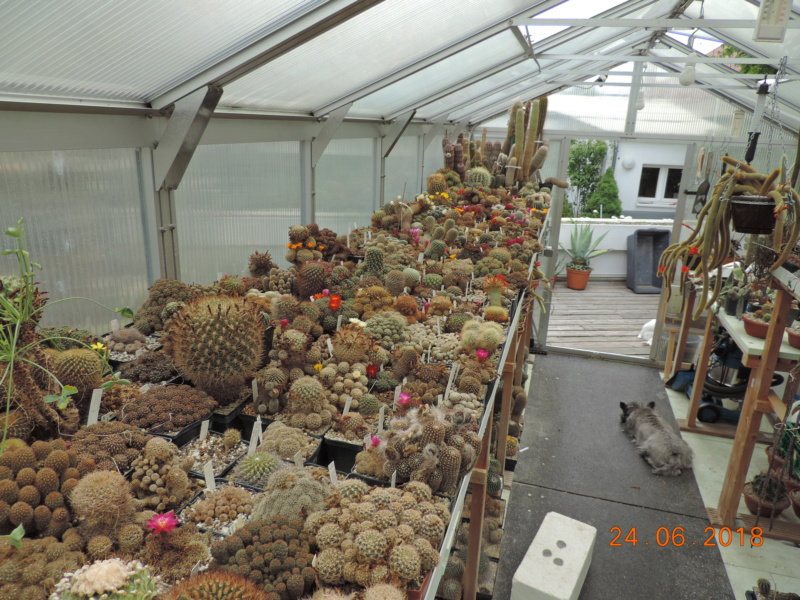 Cacti and Sukkulent in Köln, every day new flowers in the greenhouse Part 206 Bild2070