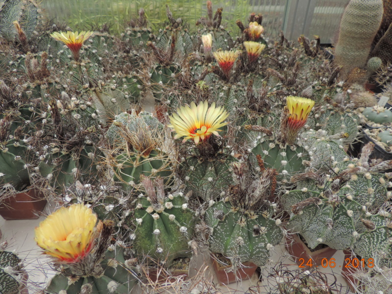Cacti and Sukkulent in Köln, every day new flowers in the greenhouse Part 206 Bild2078
