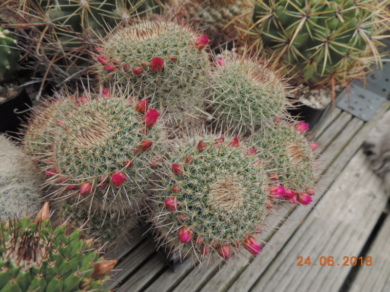Cacti and Sukkulent in Köln, every day new flowers in the greenhouse Part 206 Bild2085