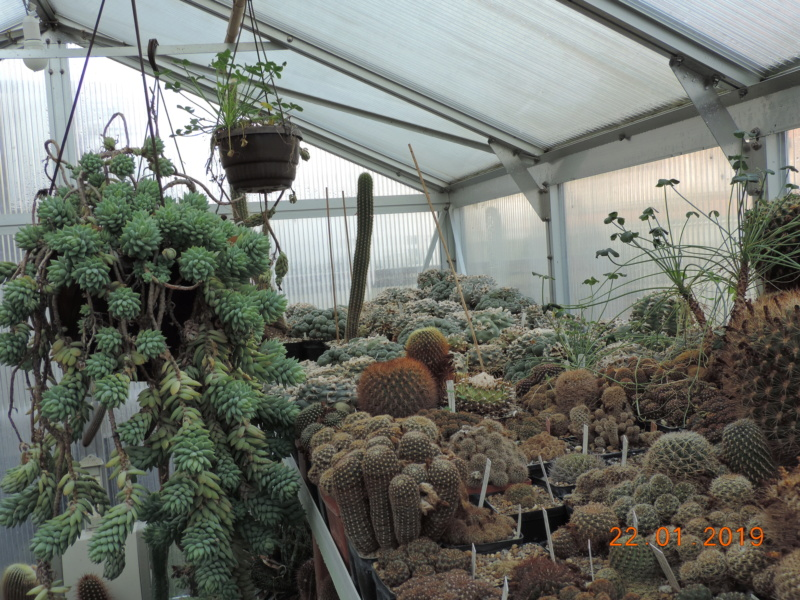 Cacti and Sukkulent in Köln, every day new flowers in the greenhouse Part 207 Bild2100