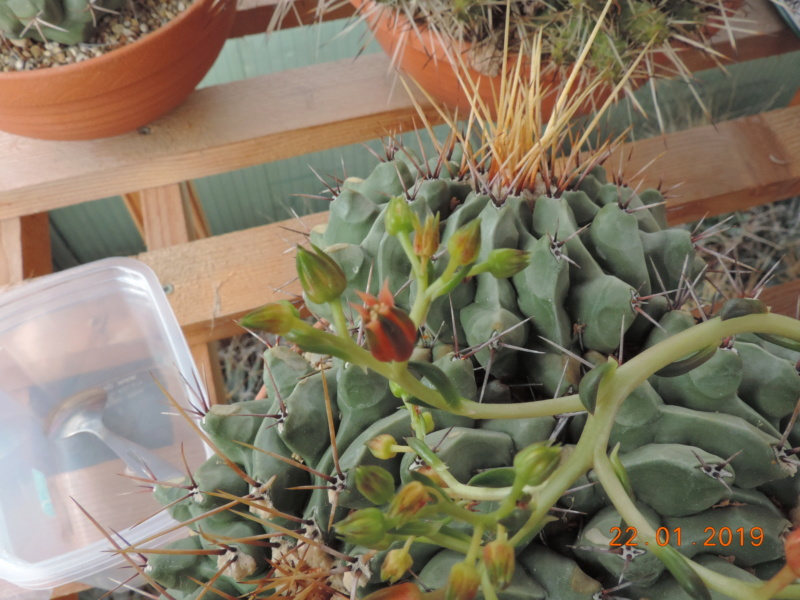 Cacti and Sukkulent in Köln, every day new flowers in the greenhouse Part 207 Bild2101