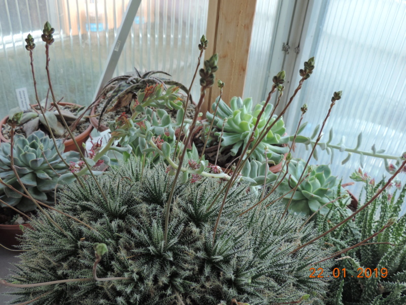 Cacti and Sukkulent in Köln, every day new flowers in the greenhouse Part 207 Bild2103