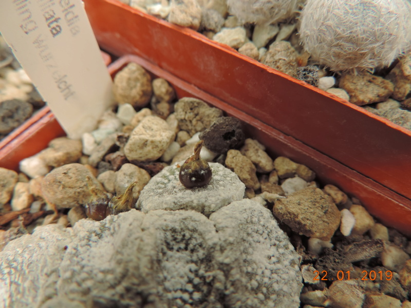 Cacti and Sukkulent in Köln, every day new flowers in the greenhouse Part 207 Bild2109