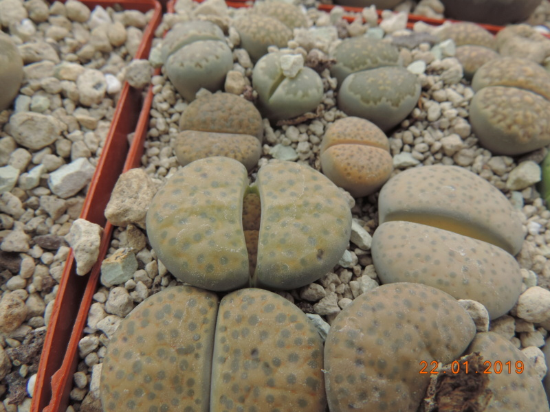Cacti and Sukkulent in Köln, every day new flowers in the greenhouse Part 207 Bild2112
