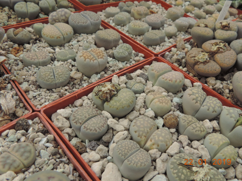 Cacti and Sukkulent in Köln, every day new flowers in the greenhouse Part 207 Bild2120