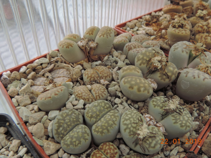 Cacti and Sukkulent in Köln, every day new flowers in the greenhouse Part 207 Bild2121