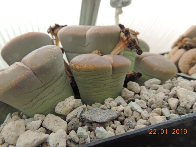 Cacti and Sukkulent in Köln, every day new flowers in the greenhouse Part 207 Bild2122