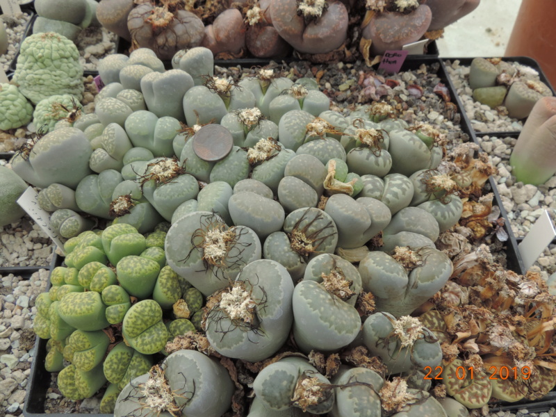 Cacti and Sukkulent in Köln, every day new flowers in the greenhouse Part 207 Bild2126