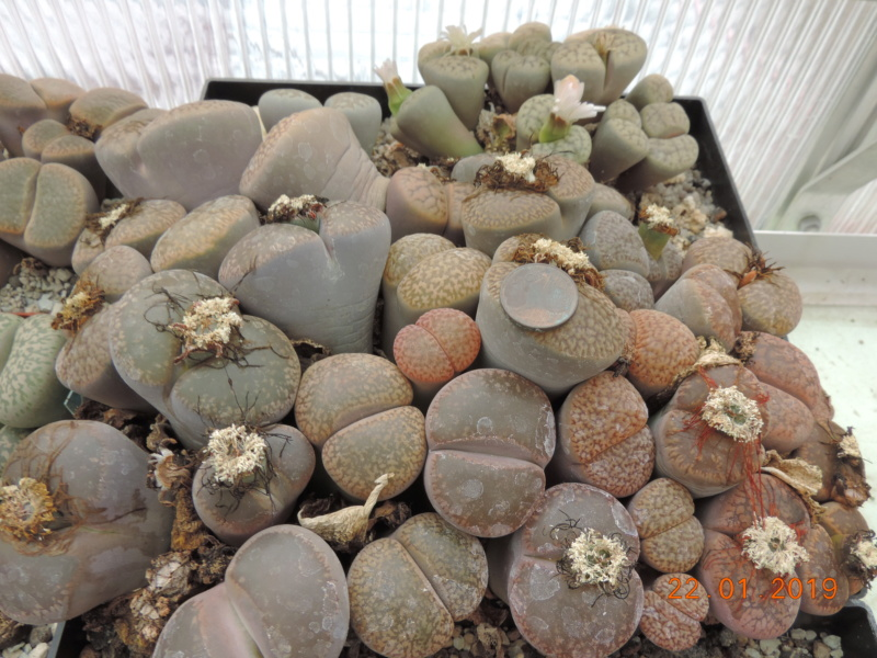 Cacti and Sukkulent in Köln, every day new flowers in the greenhouse Part 207 Bild2127