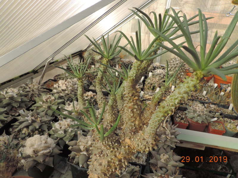 Cacti and Sukkulent in Köln, every day new flowers in the greenhouse Part 207 Bild2138
