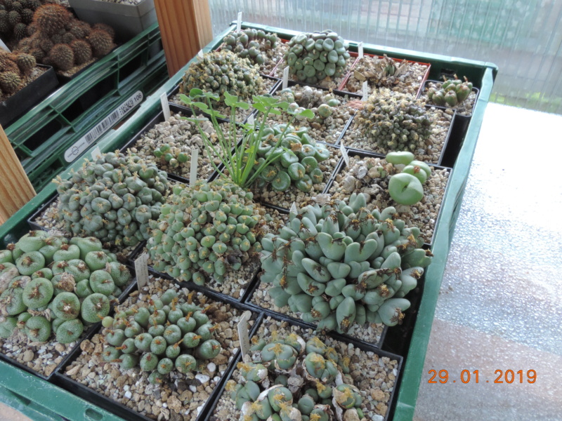 Cacti and Sukkulent in Köln, every day new flowers in the greenhouse Part 207 Bild2148