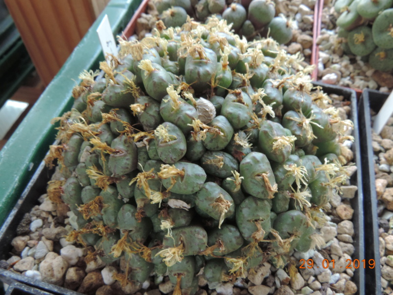 Cacti and Sukkulent in Köln, every day new flowers in the greenhouse Part 207 Bild2149