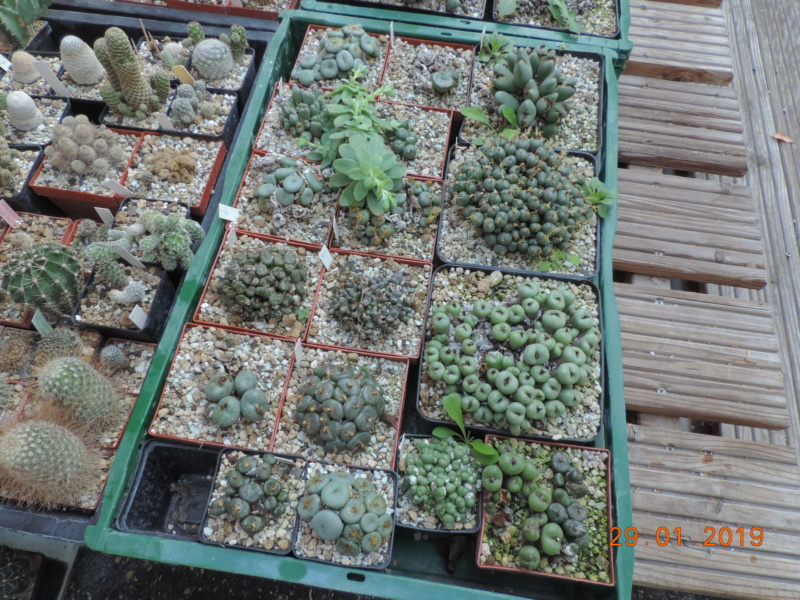 Cacti and Sukkulent in Köln, every day new flowers in the greenhouse Part 207 Bild2150