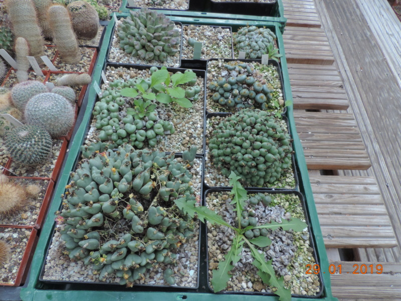 Cacti and Sukkulent in Köln, every day new flowers in the greenhouse Part 207 Bild2151