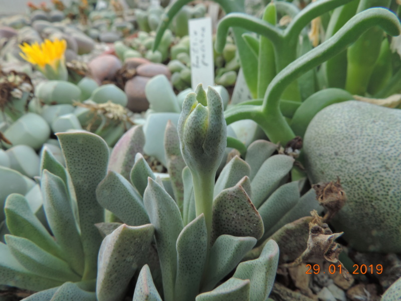 Cacti and Sukkulent in Köln, every day new flowers in the greenhouse Part 207 Bild2154