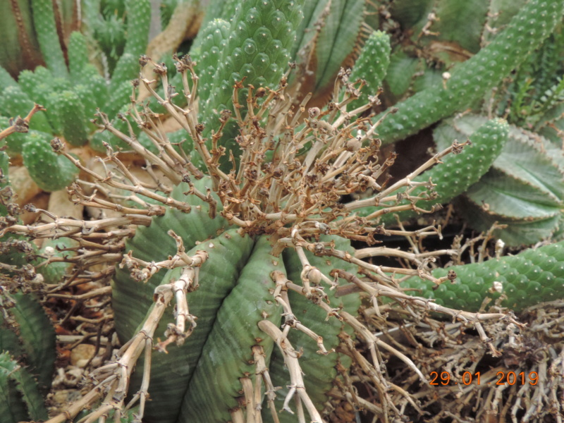 Cacti and Sukkulent in Köln, every day new flowers in the greenhouse Part 207 Bild2162