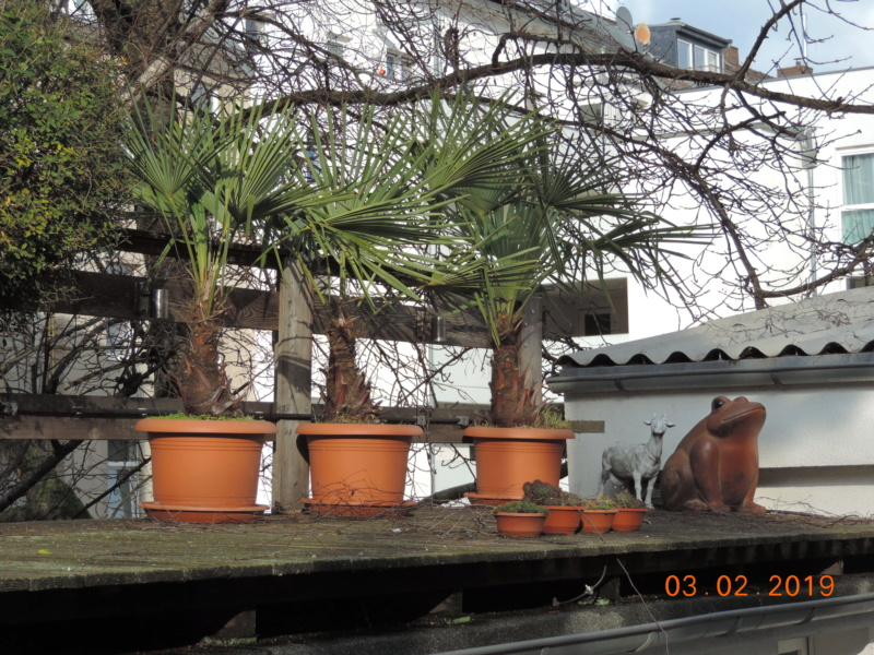 Cacti and Sukkulent in Köln, every day new flowers in the greenhouse Part 208 Bild2173