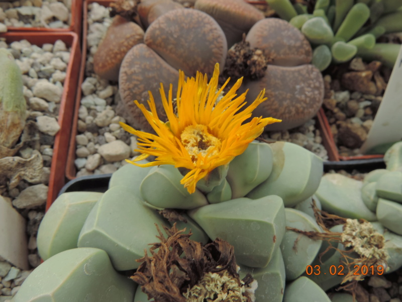 Cacti and Sukkulent in Köln, every day new flowers in the greenhouse Part 208 Bild2192