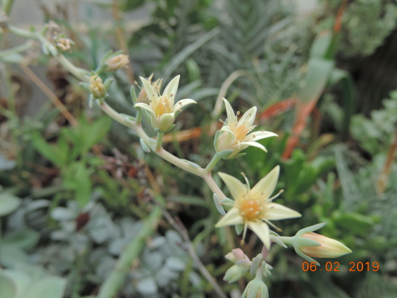Cacti and Sukkulent in Köln, every day new flowers in the greenhouse Part 208 Bild2211