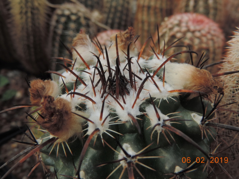 Cacti and Sukkulent in Köln, every day new flowers in the greenhouse Part 208 Bild2213