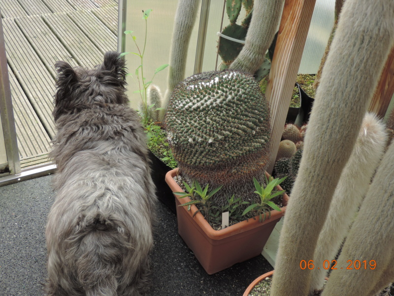 Cacti and Sukkulent in Köln, every day new flowers in the greenhouse Part 208 Bild2224