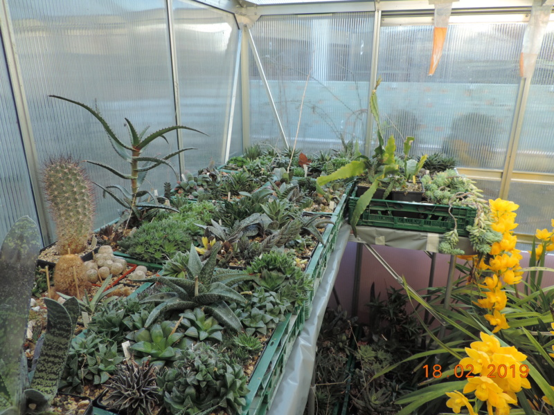 Cacti and Sukkulent in Köln, every day new flowers in the greenhouse Part 208 Bild2297