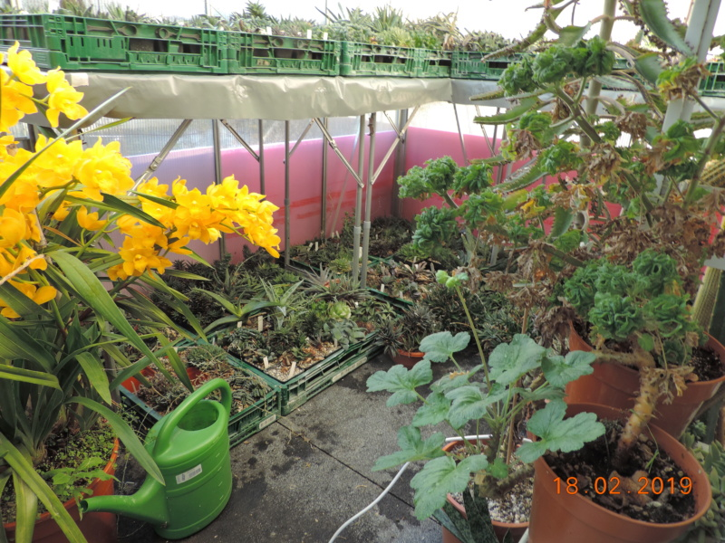 Cacti and Sukkulent in Köln, every day new flowers in the greenhouse Part 208 Bild2298