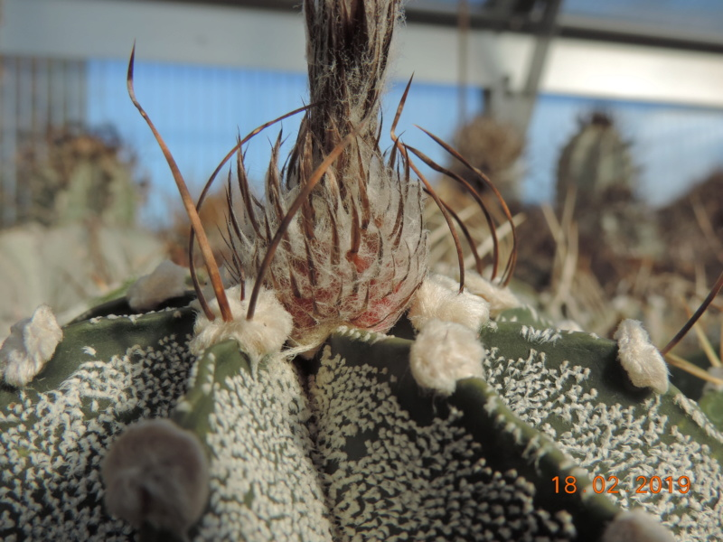 Cacti and Sukkulent in Köln, every day new flowers in the greenhouse Part 208 Bild2307