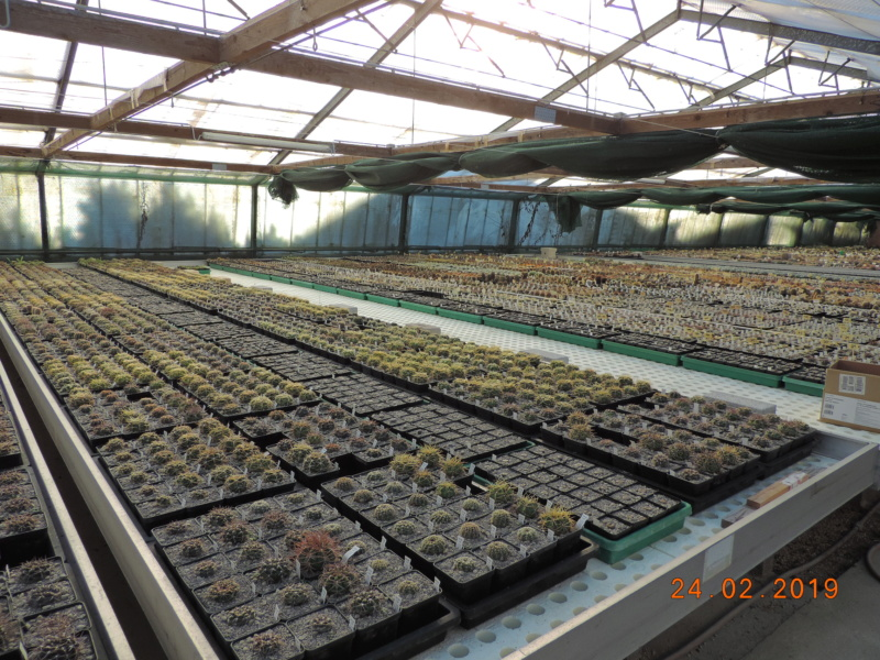 Cacti and Sukkulent in Köln, every day new flowers in the greenhouse Part 209 Bild2340