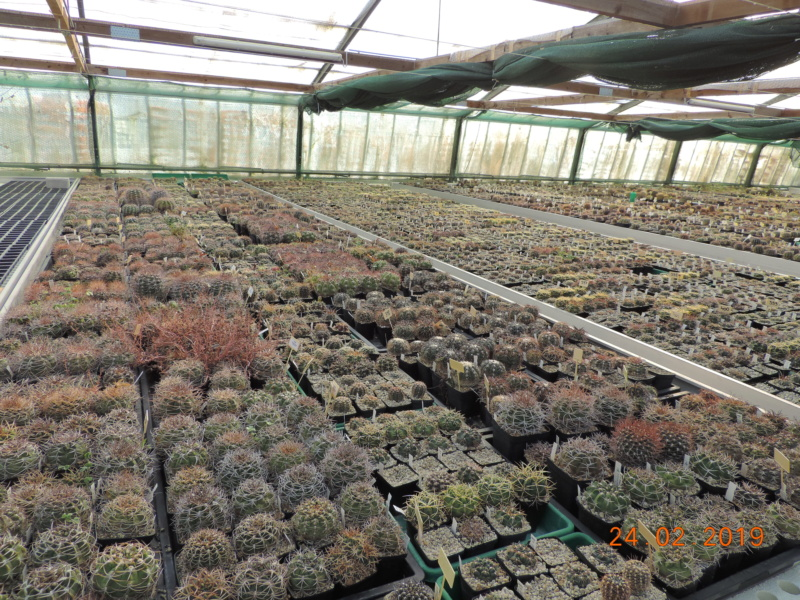 Cacti and Sukkulent in Köln, every day new flowers in the greenhouse Part 209 Bild2355