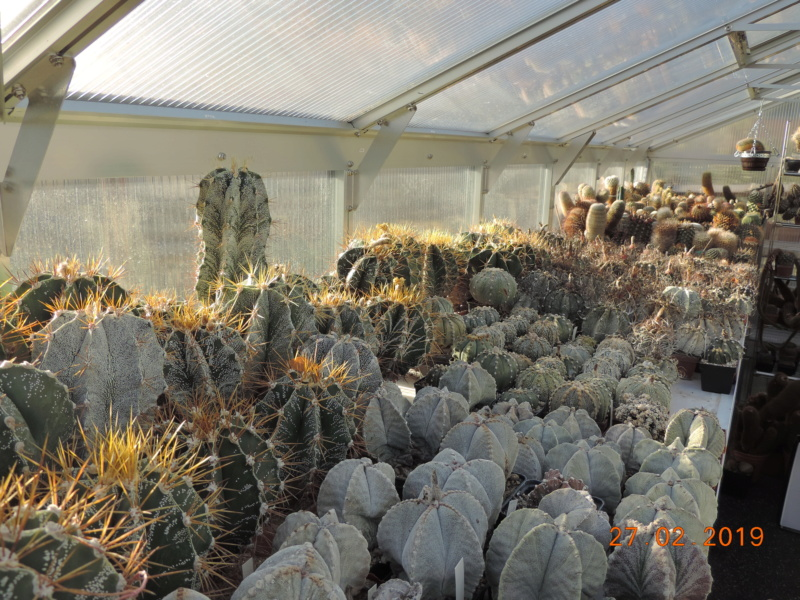 Cacti and Sukkulent in Köln, every day new flowers in the greenhouse Part 209 Bild2412