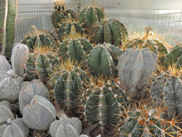 Cacti and Sukkulent in Köln, every day new flowers in the greenhouse Part 210 Bild2449