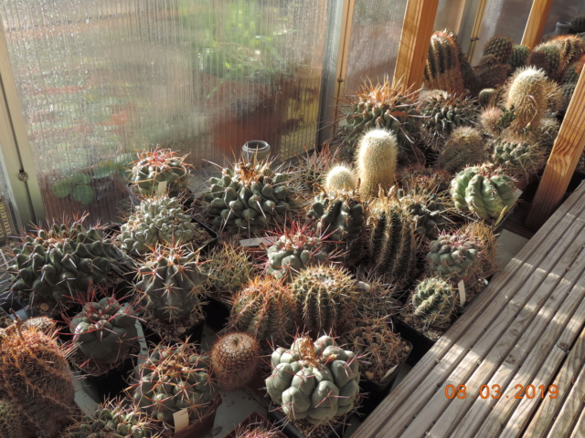 Cacti and Sukkulent in Köln, every day new flowers in the greenhouse Part 210 Bild2457