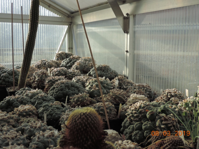 Cacti and Sukkulent in Köln, every day new flowers in the greenhouse Part 210 Bild2471
