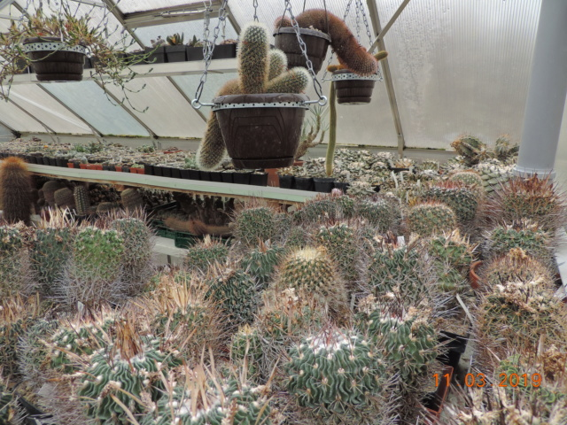 Cacti and Sukkulent in Köln, every day new flowers in the greenhouse Part 210 Bild2502