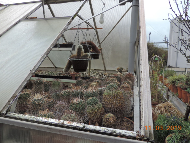 Cacti and Sukkulent in Köln, every day new flowers in the greenhouse Part 210 Bild2504