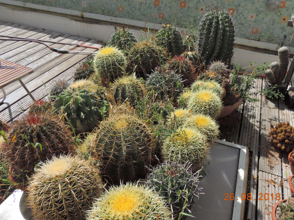 Cacti and Sukkulent in Köln, every day new flowers in the greenhouse Part 210 Bild2512