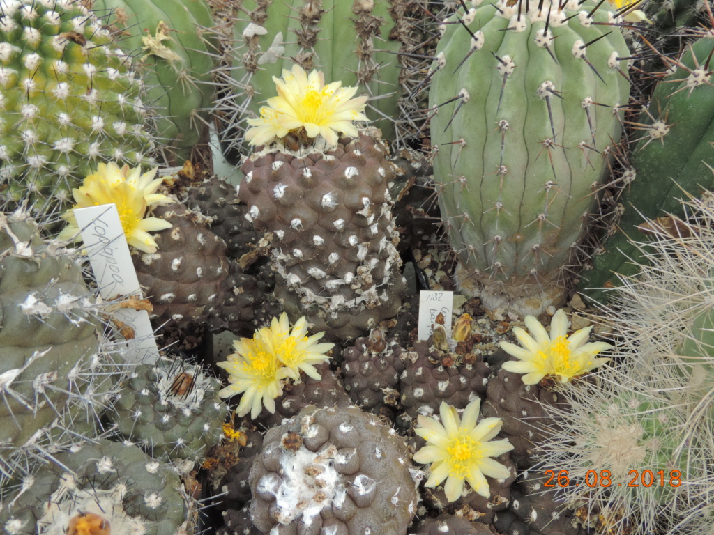 Cacti and Sukkulent in Köln, every day new flowers in the greenhouse Part 211 Bild2579