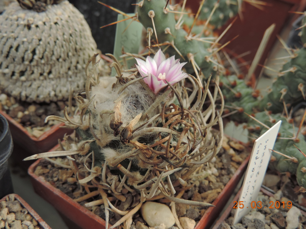 Cacti and Sukkulent in Köln, every day new flowers in the greenhouse Part 211 Bild2621