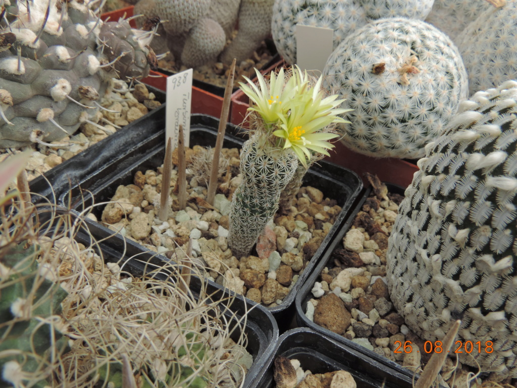Cacti and Sukkulent in Köln, every day new flowers in the greenhouse Part 211 Bild2631