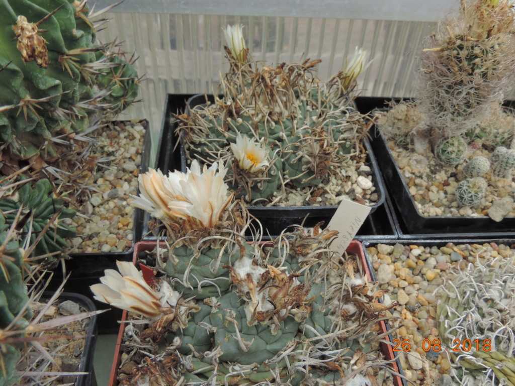 Cacti and Sukkulent in Köln, every day new flowers in the greenhouse Part 211 Bild2634