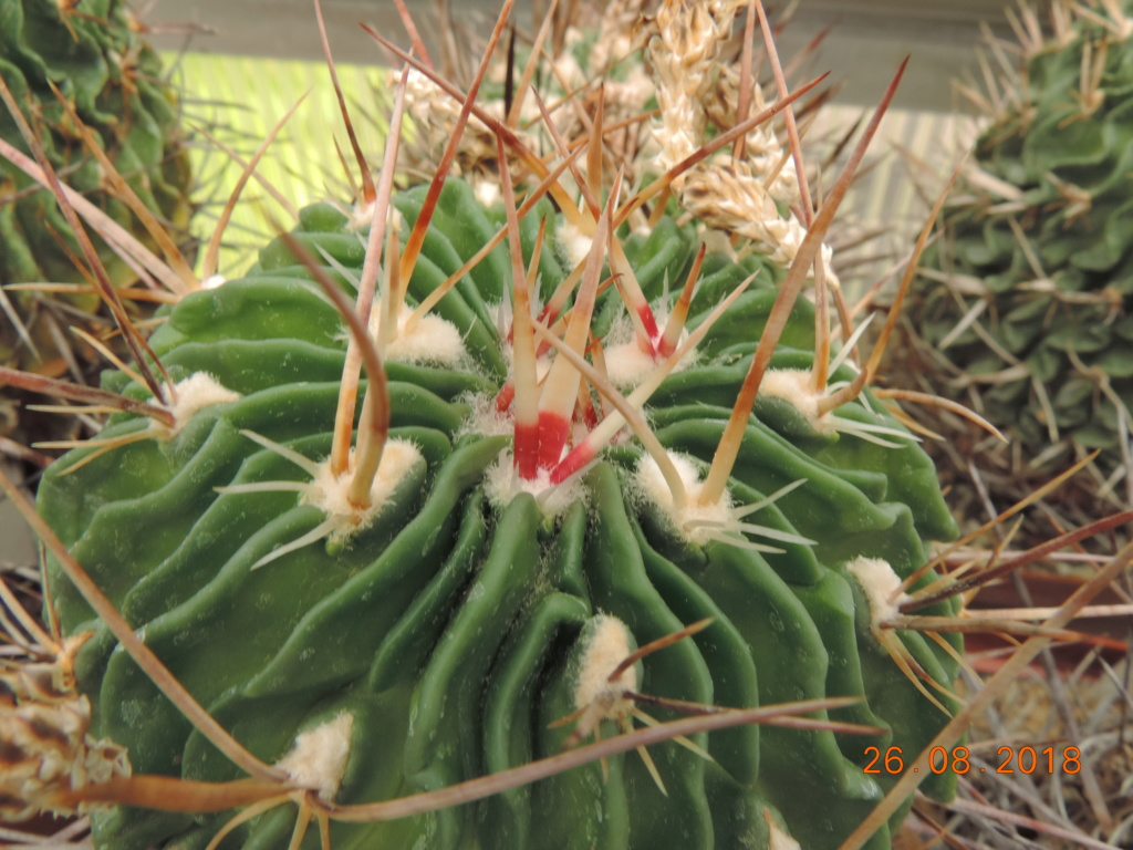 Cacti and Sukkulent in Köln, every day new flowers in the greenhouse Part 211 Bild2647